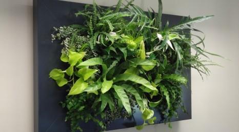 Livepicture is het levende schilderij van planten direct for Planten schilderij intratuin