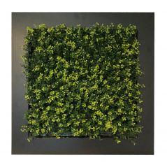 Planten schilderij buxus (kunsthaag) 67x67 cm