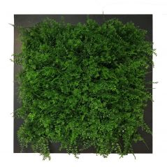 Planten schilderij varen (kunsthaag) 67x67 cm