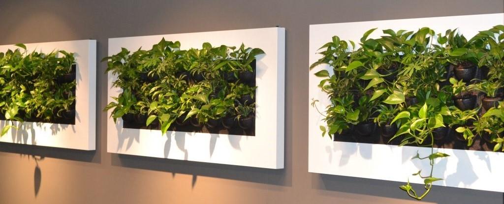 Meer groen op kantoor of in je huis met beplanting op de muur, bekijk de livepictures